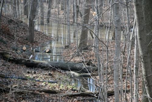 creek-3-11